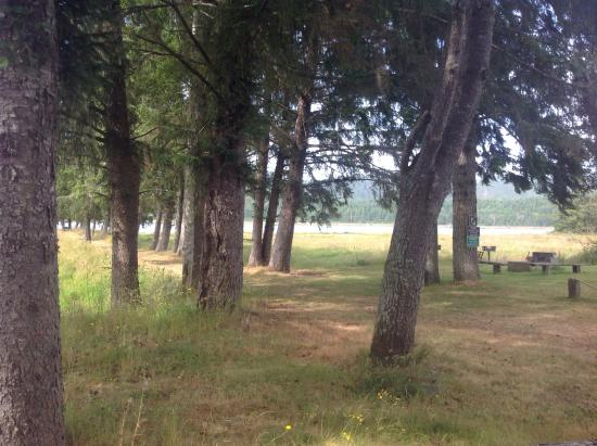 Rovers RV Park : View of the dog walk and wetlands.