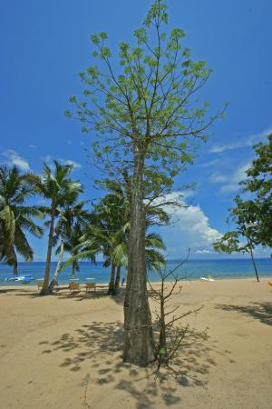 Eden Lodge : Jeune baobab sur la plage