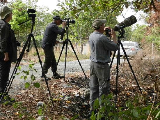 Birds And Wildlife Photography Tours  Picture Of Panama Bird Guide  Privat