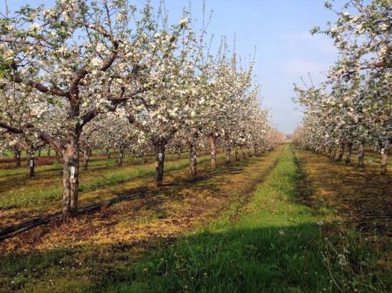 Freeland, MI: Leaman's Green Applebarn