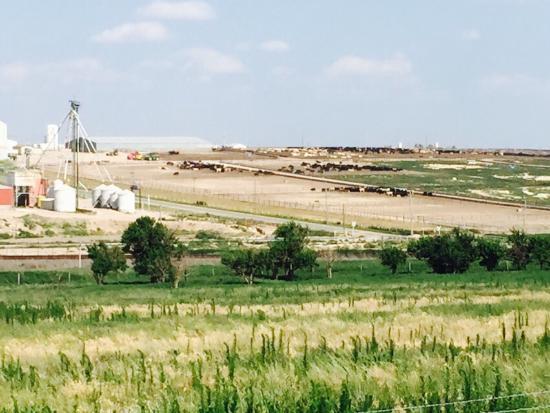 Cattle Feedlot Overlook