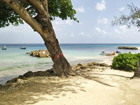 The Garden Picture Of Crystal Cove By Elegant Hotels Saint James Parish Tripadvisor