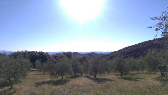 Country House Montali: the view