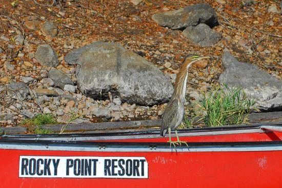Rocky Point Resort: Daily visitor