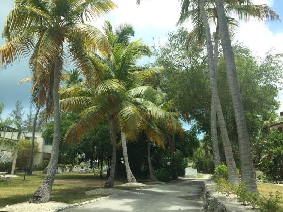 Matecumbe Resort: After reading some reviews this was really not a bad place to stay!