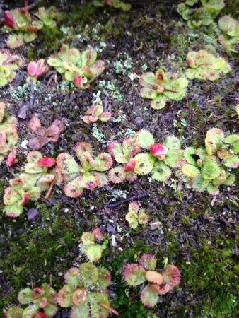 Langwarrin Flora & Fauna Reserve