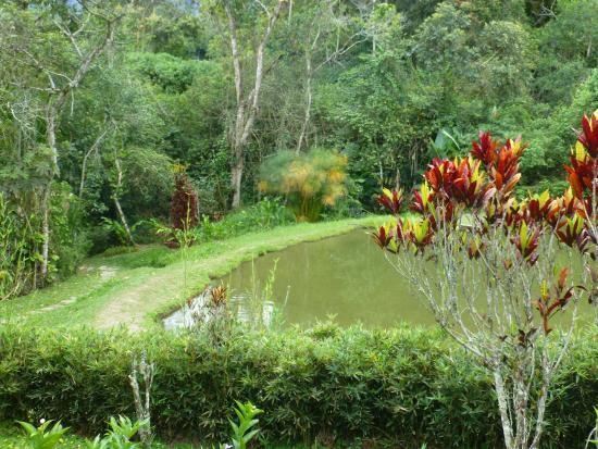 Lago de tortugas picture of jardin botanico san jorge for Lagos de jardin