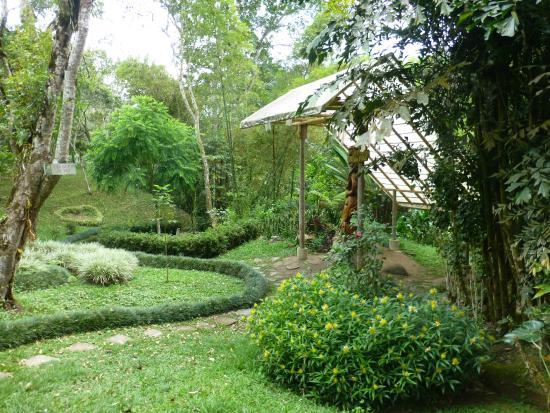 Lago de tortugas picture of jardin botanico san jorge for Botanico jardin