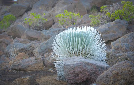Paia, Hawái: Maui Sunriders- Silver  Sword