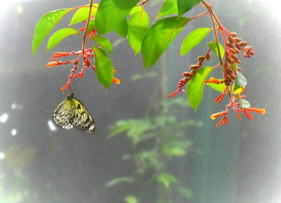 Butterfly in the mist - Picture of Victoria Butterfly Gardens ...