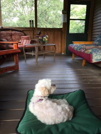 Rim Rock's Dogwood Cabins: All members of the family enjoyed the screened porch!