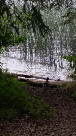 Carson-Pegasus Provincial Park: Duck headed into the lake.