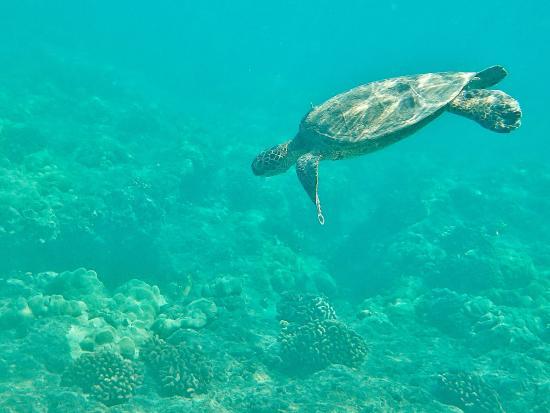Manini Kapahukapu Beach : look what i saw