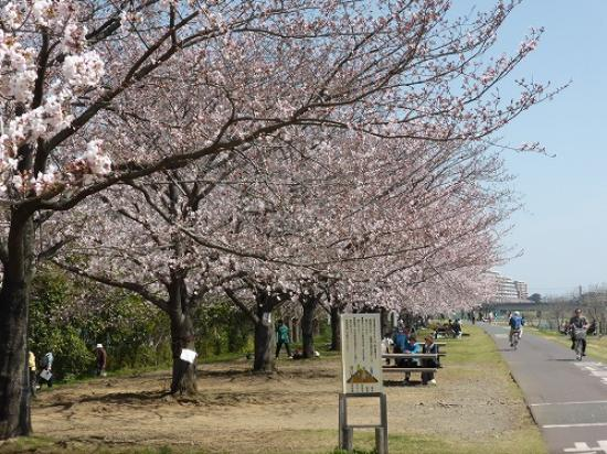 Fuchunomori Park: 隣の野球場周辺の桜