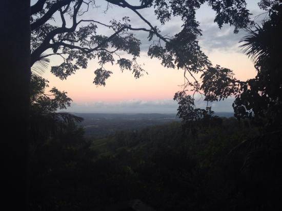 Treetops Montville: Rainforest paradise!!!