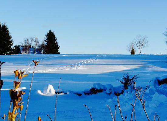 Big Country House: Winterlandschaft in BLAU
