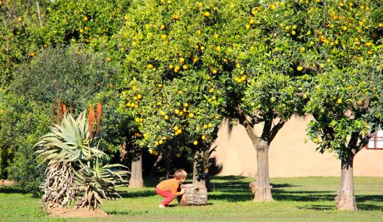 Addo, Sør-Afrika: Orange trees