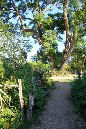 Addo, แอฟริกาใต้: pathway with aloes to reception area