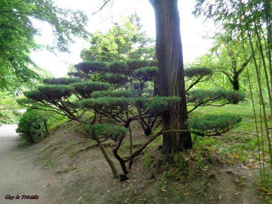 Plan d 39 eau vu de la maison picture of jardin japonais toulouse tripadvisor for Plan jardin japonais