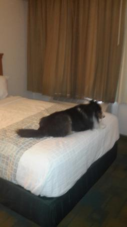 La Quinta Inn College Station : Two queen beds