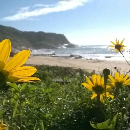 Balneario Camboriu, SC: Praia do Pinho