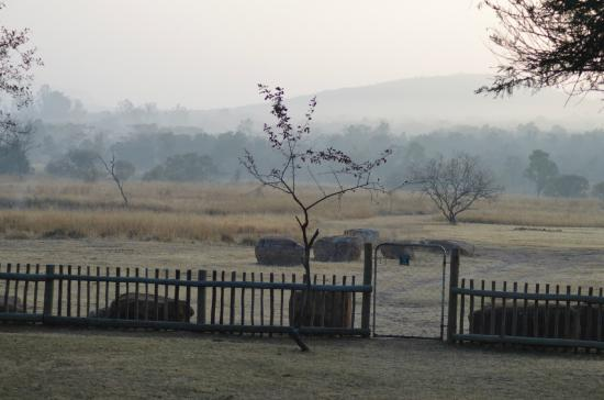 Lindani Lodges: View from patio