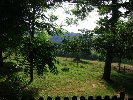 Les Hauts Paturages : View through the trees