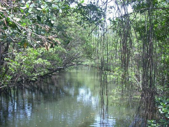 Enchanted Forest Elaine Gordon Park: Mangrove Creek