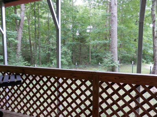 Four Paws Kingdom: View from the Prowler RV deck overlooking forest