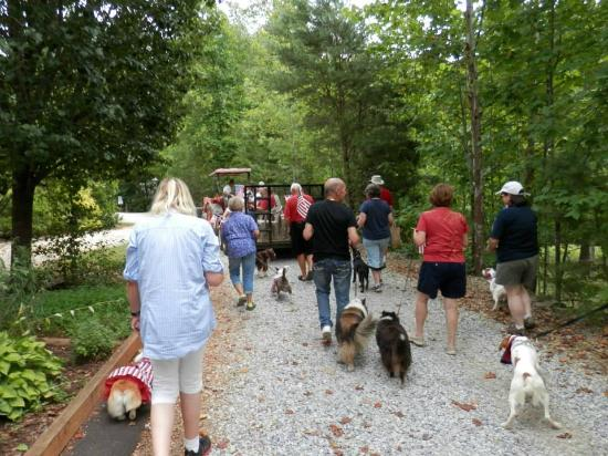 Four Paws Kingdom: Fourth of July Puppy Parade