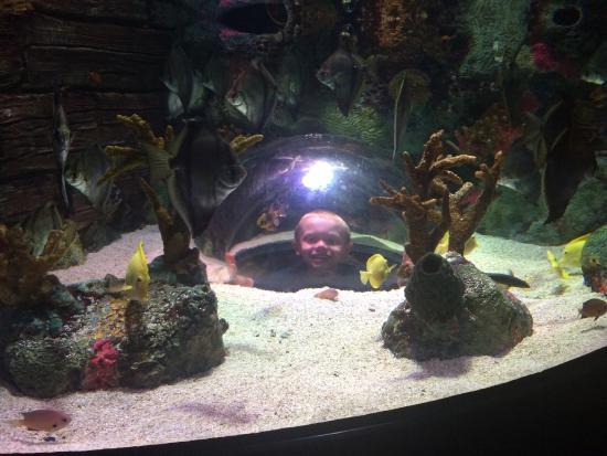 Picture Of Sea Life Kansas City Kansas City