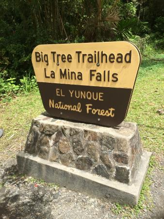 Big Tree Trail: The trailhead