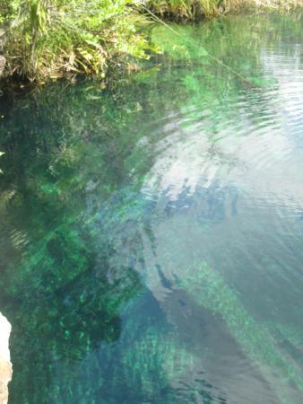 Cenote Crystal: Cenote Escadero
