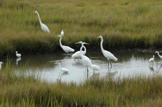 Eastern Shore of Virginia, فيرجينيا: The Eastern Shore of Virginia is an important international birding destination.