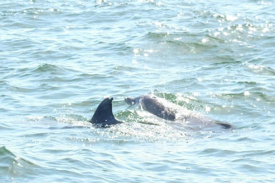 Dolphin Drive Treasure Island Fl