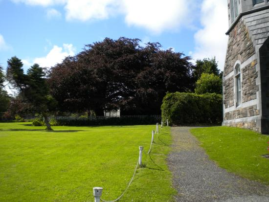 Harry Clarke Stained Glass Windows: outside the chapel...largest tree we saw in the Dingle area