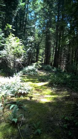 San Juan Islands, วอชิงตัน: Trail to Bradbury Lake on Cypress Island