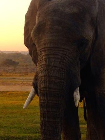 Camp Jabulani Elephant Experience: Jabulani