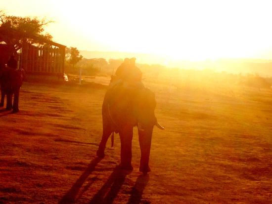 Camp Jabulani Elephant Experience: gorgeous sunrise