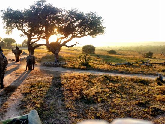 Camp Jabulani Elephant Experience: getting started