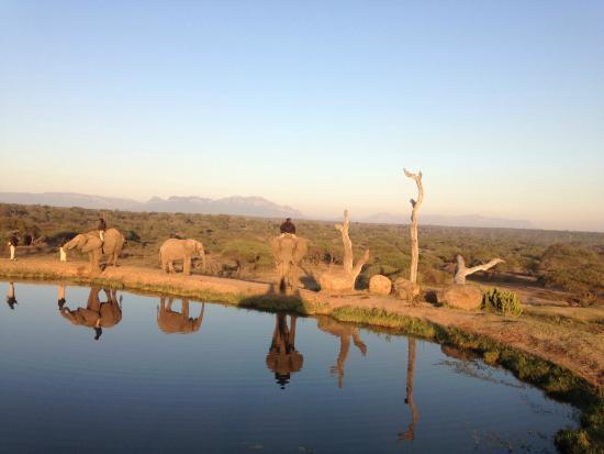Camp Jabulani Elephant Experience: beautiful scenery