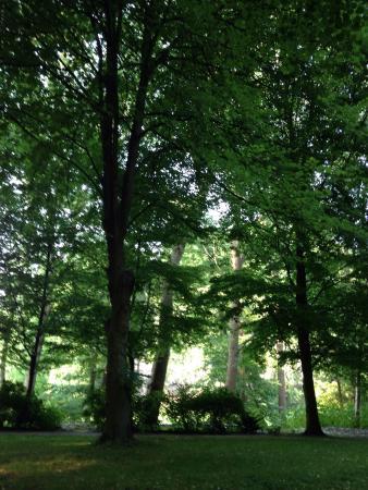 Zum Hackstück: The woods in the hotel grounds (photo taken looking towards the hotel)