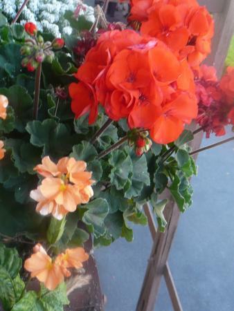 Glen Tavern Inn: Flower box outside our second floor room