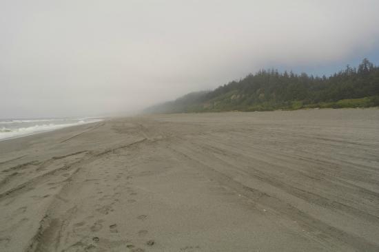 Gold Bluffs Beach Campground: Beach N view