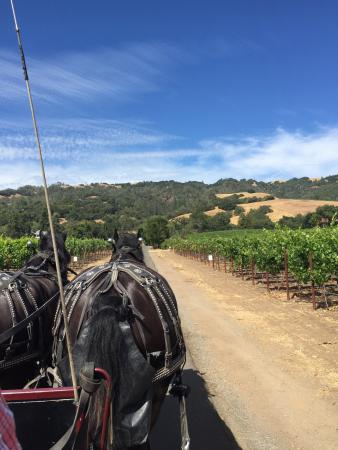 The Wine Carriage: photo0.jpg