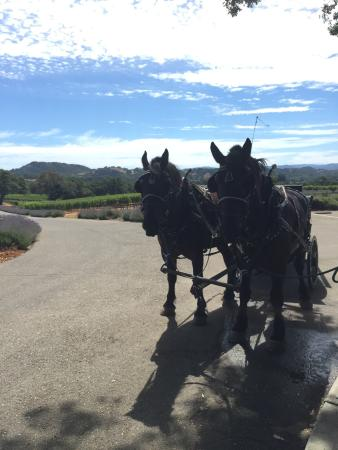 The Wine Carriage: photo1.jpg