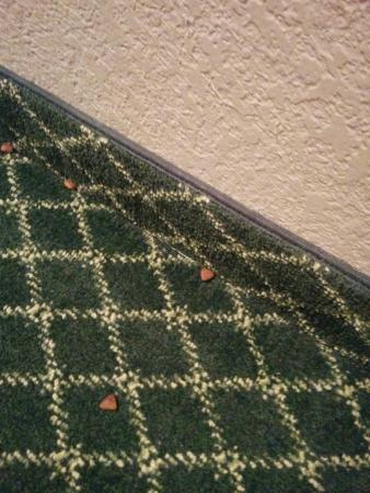 Veradale, WA: Dog/cat food on the carpet