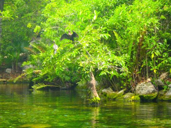 Ave en el cenote Azul