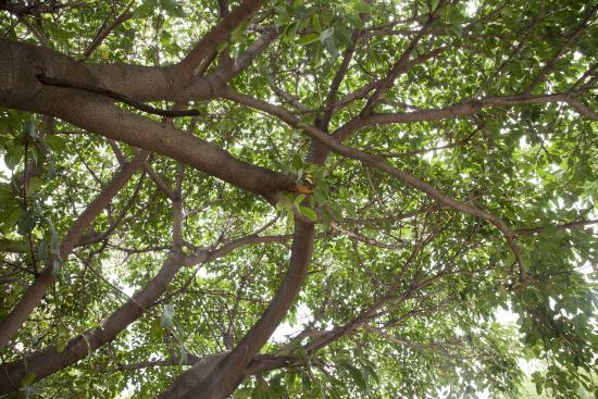 La Bella B&B Under The Fig Tree (Bela Bela, Sydafrika ...