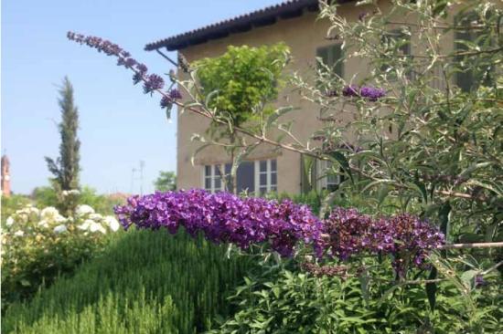 Cascina Rosetta: Flower from the garden